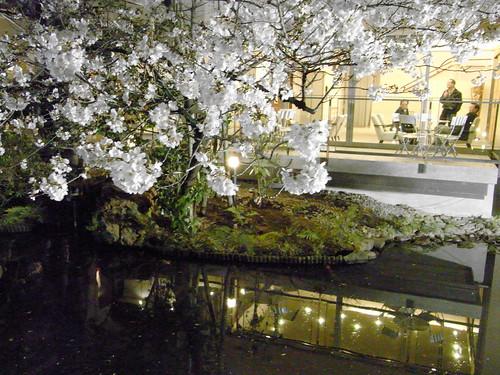 浮月楼の夜桜