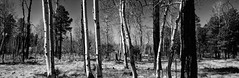 Can't see the wood for the trees (Mono)