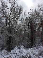 IMG_2220 (augiebenjamin) Tags: winter provocanyon mountains orem provo lindon utah snow clouds trees sky byu brighamyounguniversity art