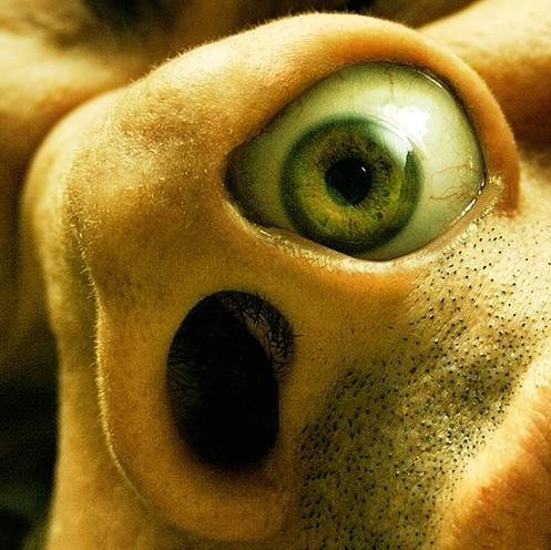 noseeye