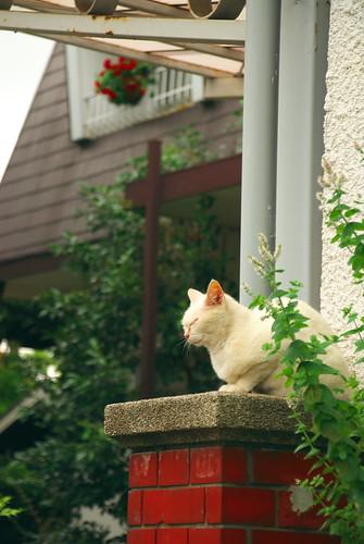 猫 山手在住