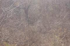 CARIRI_II_OUT_2006 058 (Nelson Luiz Wendel) Tags: caatinga ecossistema socioambiental xerófitas mandacaru bahia ceará piaui paraiba pernambuco sergipe espiritosanto minas gerais alagoasmaranhãoflorestanordestebrasil brasileiro estepedesertificaçãoterrasseridocaririsertão mataatlantica rainforest ecosystem environment biodiversity walk landscape panorama nature ecotourism adventure tourism trees mountains surrounding water flora fauna rock river ecology geography geology brazilian マタ大西洋熱帯雨林の生態系環境生物多様性、自然のパノラマ風景を歩く冒険エコツーリズム観光カーティンガブラジルの木の山の水植物動物生態学地理学地質学岩石川周辺 ökosystem regenwald umwelt der biologischen vielfalt zu fus landschaft art ökotourismus abenteuertourismus bäume berge rund um wasser fliesgewässerökologie geographie geologie brasilianischen nelsonluizwendel wendel nelson