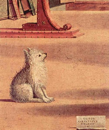 Carpaccio dog
