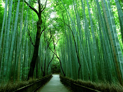 Sagano (azkin) Tags: trees green japan forest kyoto arch cathedral bamboo doorway bow  gateway   treehugging sagano    huggingtrees cathedraloftrees twotreeshugging intertreehugging doorwayoftrees gatewayoftrees