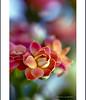Happy Saturday! (helenabraga) Tags: flower brasil flor helena excellence helenabraga platinumphoto exquisiteimage alemdagqualityonlyclub paololivornosfriends artofimages bestcapturesaoi