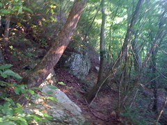 19 - Trail