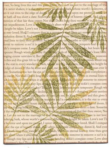 Ferns Over Text
