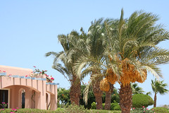 (Adele Liu) Tags: summer vacation resort egitto  clubmed watersport elgouna  villaggio   egypet