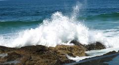 splash (Alegrya) Tags: ocean beach rock waves breakingwave currumbin
