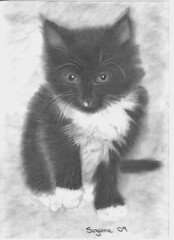spark (suzanne2306) Tags: portrait cute art animal pencil cat real sketch kitten artist drawing line favourite