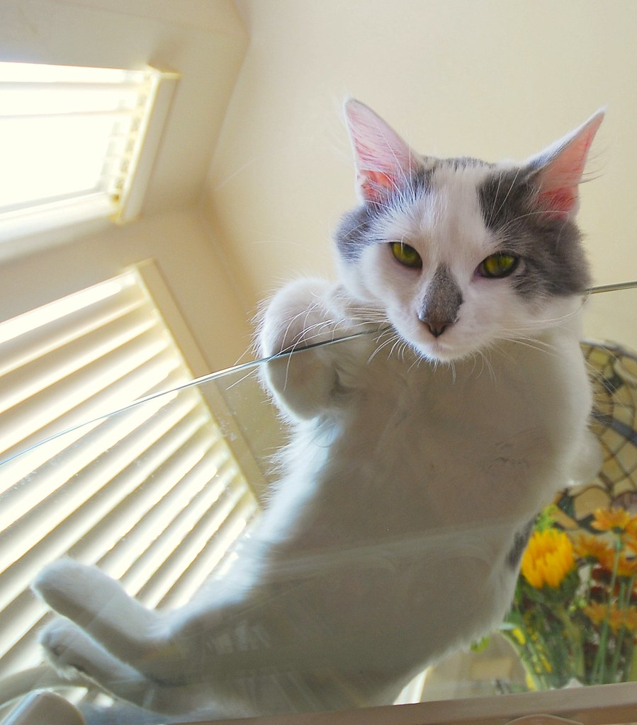 Cat on a Hot Glass Table...........