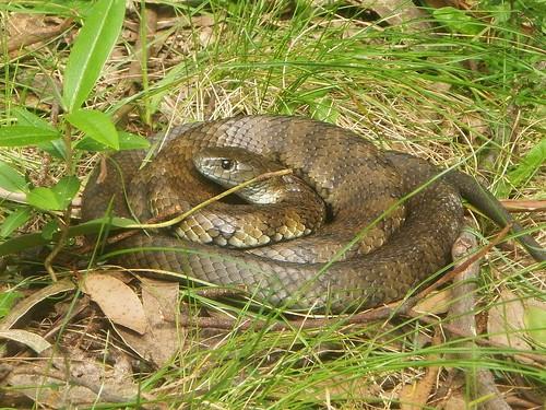 Habitat of Python Snakes