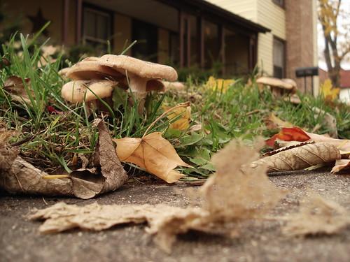 mushroom clump...