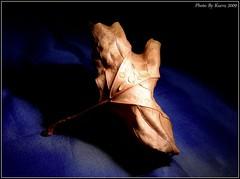 Crumpled Leaf (KürvZ) Tags: autumn light shadow plant leaf pentax hero winner naturesfinest gamewinner k20d thepinnaclehof dec09tp feb10tp tphofweek31