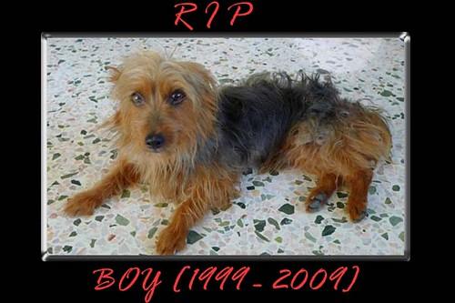 RIP Boy
