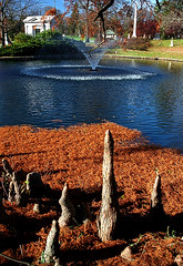 "Cincinnati - Spring Grove Cemetery & Arboretum ""Ceder Lake Fountain & Cypress Tree Flares"" (David Paul Ohmer) Tags: ohio cemeteries lake david tree water fountain cemetery graveyard leaves death spring pond die grove spirit cincinnati cemetary arboretum conservatory graves historic soul burial cypress knees needles grounds tombs flares strauch gravesites deceased ceder springgrovecemetery springgrove victorian springgrovecemeteryandarboretum davidpaulohmer ohmer cemeterygothic revivalnational landmarkadolph"