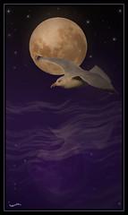 refletDeLuneFlickr (nathalie56☆) Tags: moon lune d50 nikon seagull 300mm creation mouette nathalieribiere nathalie56