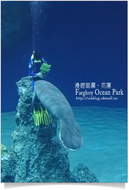 花蓮海洋公園一日遊26
