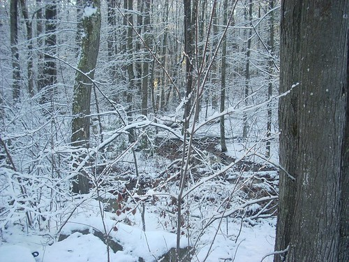 Snowy Sunday 6