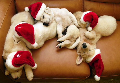 sleeping santa dogs / chotda