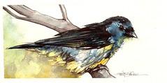 Blue (Jennifer Kraska) Tags: blue bird watercolor jennifer kraska jenniferkraska