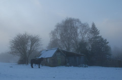 Misty Morning (scuba_dooba) Tags: trees england horse mist snow cold fog north shed foggy east northumberland hut