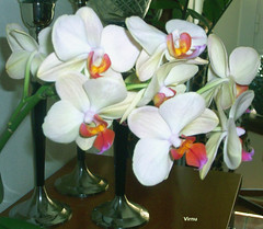Flores 190 (VRNU) Tags: flores whiteflowers vrnu floresporlapaz giveme5awardthenext5pictures