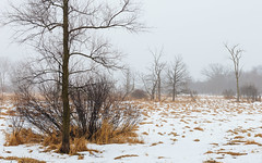 Ascetic (John Westrock) Tags: winter fog foggy trees snow wisconsin midwest marsh canoneos5dmarkiii canonef2470mmf28lusm