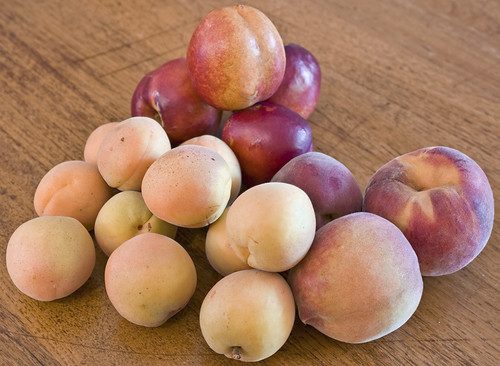 nectarine apricot peaches