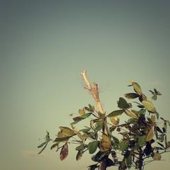 (Syka Lê Vy) Tags: trees sky cloud love dead vietnam vy dying dreamer 2009 sunnyday sleepwalker lê syka yourloveisalie fromsykawithlove sykalevy lehoangvy sundayspirit
