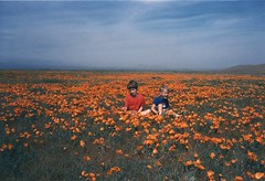 Out in the Open (Designer Michael) Tags: california flowers southwest desert 1987 meadow poppies antelopevalley springtime mojavedesert californiadesert desertsouthwest