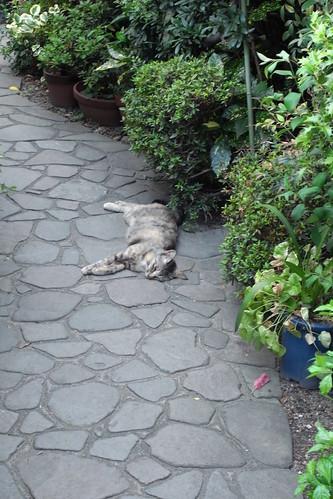 Today's Cat@20090718