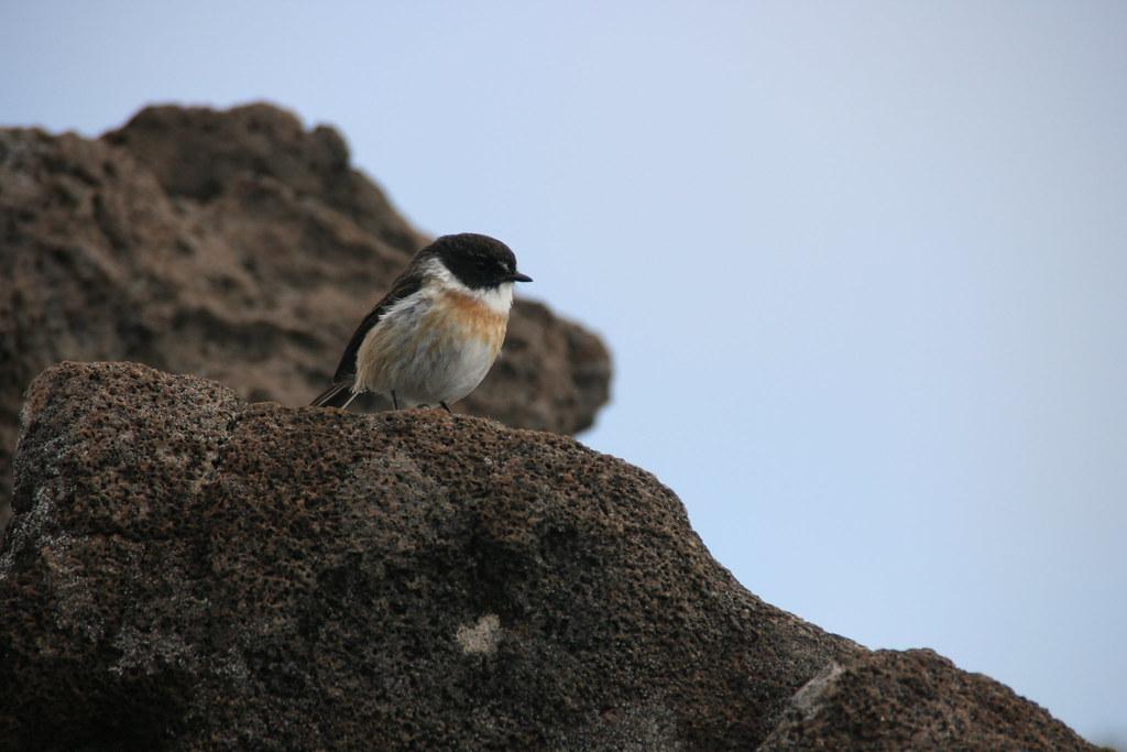 Le Volcan Oiseau