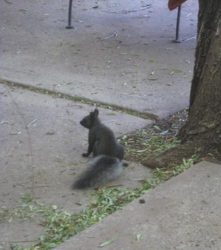 Squirrel 012