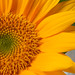 0908 flowers #6