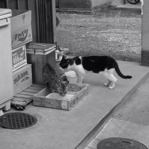 Today's Cat@20090814