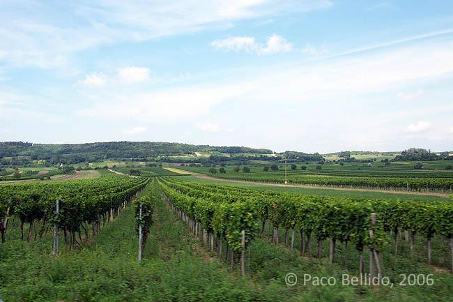 Viñas en burgenland. © Paco Bellido, 2006