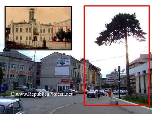 Copacul de langa Primaria Veche