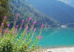 lago ANTERSELVA (aldofurlanetto) Tags: lago maggiore anterselva flickrestrellas garofanino garofaninomaggiore vosplusbellesphotos