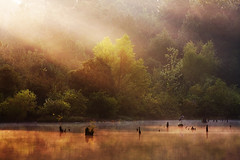 First Light on the Pond (clay.wells) Tags: park county light summer cloud sun mist mountain tree heron water rock fog sunrise canon lens photography eos interesting pond log woods education day ray place natural state little you 1st outdoor weekend clayton labor wells september beam explore telephoto stump cypress arkansas usm 75300mm knee frontpage 2009 sunbeam ef sunray pinnacle pulaski bigmomma fairytaleland f456 img1032 40d thechallengefactory thepinnaclehof tphofweek10