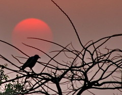 Sunset (SWAIDAN  to Syria  G.W.L.K_) Tags: sunset bird beautiful birds canon egypt cairo canon350d kuwait eso concordians goldstaraward swaidan
