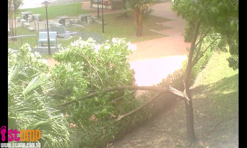 Tree at Bukit Batok West collapses due to strong winds