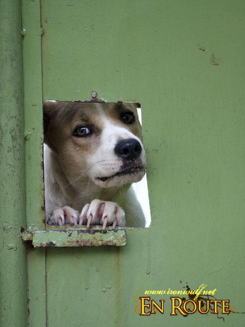 Puraran Doggy Peek