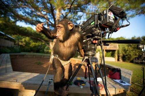 Camera Monkey, natch...