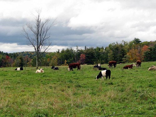 Belties in the fall