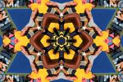 6-Point Kaleidoscope