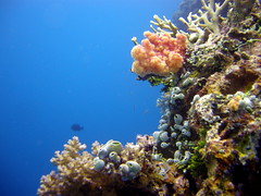 ocean coral island underwater pacific scuba diving mast wreck weno chuuk federatedstatesofmicronesia truklagoon sankisanmaru