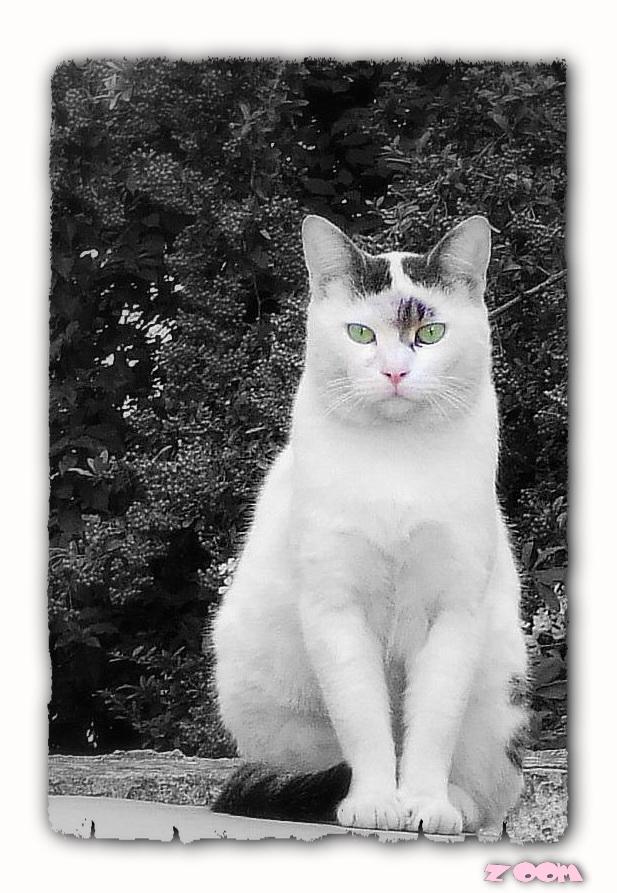 a cat 2azoom