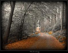 Steinbruchweg - art version (NPPhotographie) Tags: wood autumn tree art fall forest germany way path creative oberberg platinumphoto vanagram elitegalleryaoi