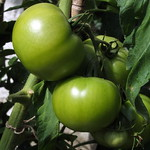 Unfried Green Tomatoes at Trerice thumbnail